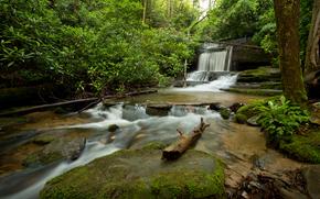 forêt, arbres, nature, cascade
