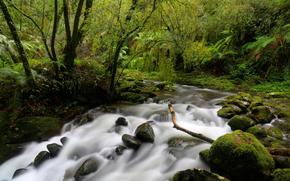 forêt, arbres, rivière, cours, noyaux, nature