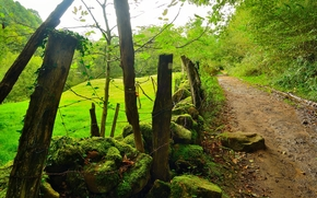 道路, 木, 石, 風景