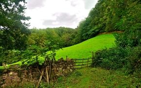 フィールド, 丘, 森, 木, フェンス, 風景