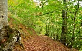 森, 木, 自然