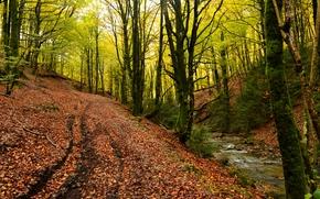 森, 木, 自然, 道路, 川, 秋