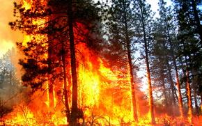 foresta, alberi, fuoco, fuoco, paesaggio