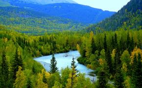 река, горы, лес, деревья, осень, пейзаж
