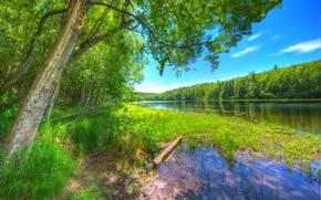 река, лес, небо, деревья, пейзаж