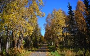 осень, дорога, деревья, пейзаж