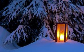 winter, light, spruce, snow, tree, lantern