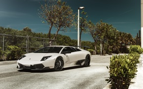 Lamborghini, фонарь, белая, мурселаго, деревья, ламборджини