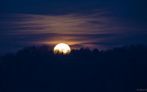 синее, небо, луна, Ночь, лес, полнолуние