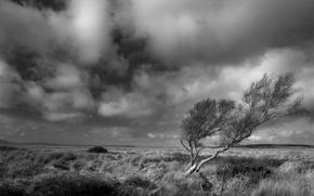 b \ w, árvore, estepe, vento