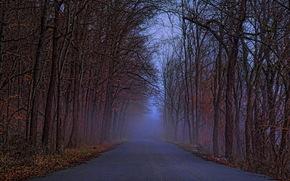paesaggio, foresta, stradale