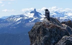 pietre, Montagne, raven, uccello