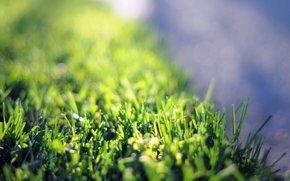Fiori, ROSA, Widescreen, erba, Petali, fiore, carta da parati, Macro, fiorellino, fullscreen, Widescreen, sfondo, prato, Verde, verdi