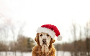 friend, dog, holiday