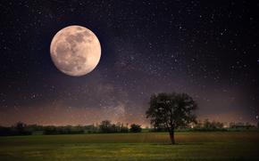 pleine lune, ciel, nature, paysage, arbre solitaire, belle scène, lune, nuit, Étoile