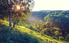 sun, hill, forest, grass, summer, morning, fog, trees, Birch