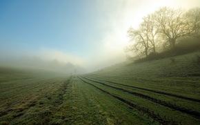 fog, field, morning, landscape