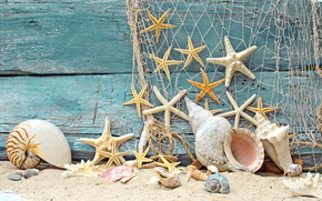 ракушки, дерево, песок, пляж, камушки, морские звезды, сетка
