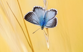 spica, butterfly, background