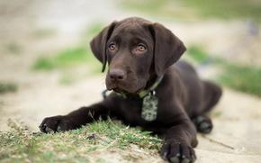 friend, dog, view