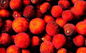 水果, 杨梅, 种子核果