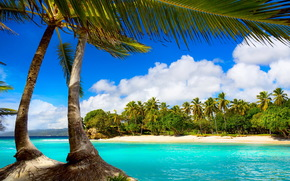 Palms, sea, tropics, beach
