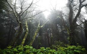 Тропический лес между городами Синтра и Кашкайш, Португалия