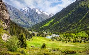 India, foresta, fiume, nuvole, Montagne, pietre