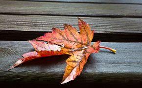 широкоформатные, фон, широкоэкранные, обои, полноэкранные, мокрый, листик, макро, листья, листочек
