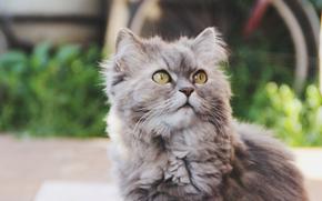 gato, COTE, verano, generosamente