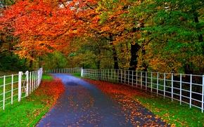 natura, fogliame, alberi, autunno, stradale, foresta, parco