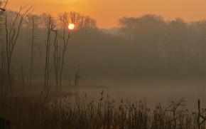 rano, Meklemburgia-Pomorze Przednie, Niemcy, mgła, wzrost, Park Narodowy Müritz, jezioro