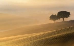 nebbia, paesaggio, campo, mattinata, chiaro, alberi