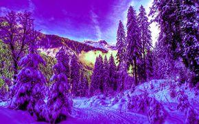 inverno, foresta, nevicata, abete rosso, paesaggio