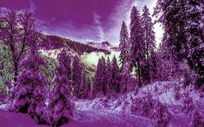 зима, лес, снег, ели, пейзаж