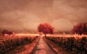 carretera, viñedo, paisaje