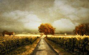 道路, 葡萄园, 景观