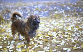 朋友, 狗, 秋