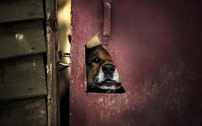 porta, cane, sfondo
