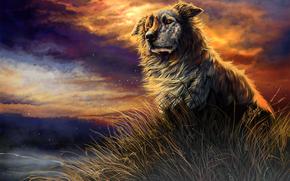 tramonto, nuvole, cane, erba