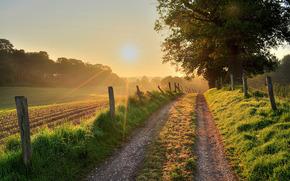 stradale, foresta, alberi, sole, natura