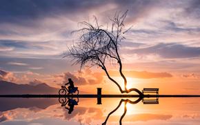 отражение, велосипед, женщина, дерево, закат, силуэты