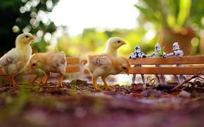 Macro, Toys, chickens