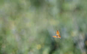 background, blur, glare, butterfly, flight