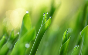 foliage, Macro, greens, Lily of the valley, drops, nature, dew