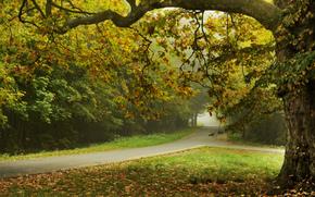 Alberi di autunno, fogliame, bellissimo paesaggio, strada, stradale, Autunno Park, natura, alberi