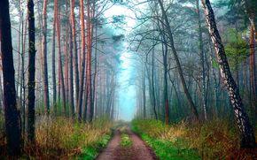 Aprile, natura, stradale, foresta, PRIMAVERA, haze