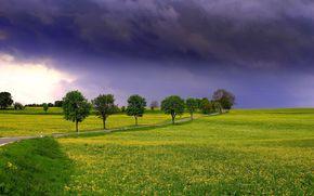 поле, дорога, тучи, деревья, пейзаж