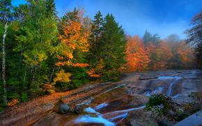 秋, 河, 岩石, 雾, 森林, 树, 景观