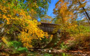 autumn, trees, small river, bridge, landscape